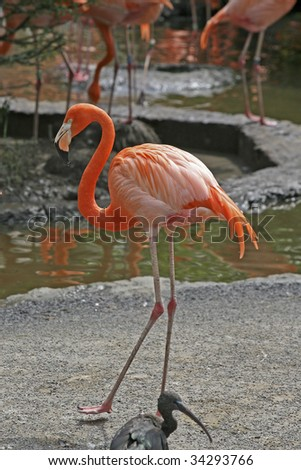 a red flamingo - stock photo