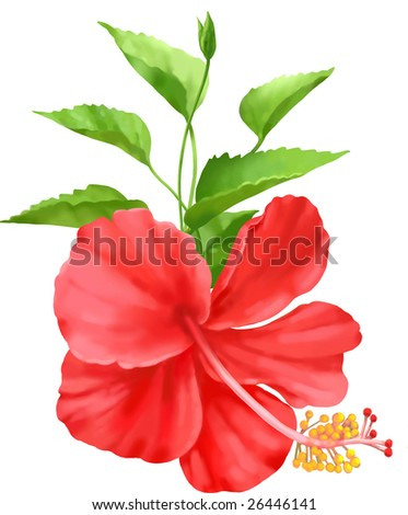 a red hibiscus.