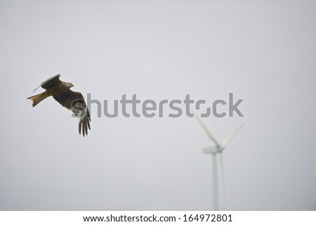 A Red Kite (Milvus milvus) in flight with a defocused wind turbine in the background at Bwlch Nant Yr Arian, Ceredigion, Mid-Wales. - stock photo