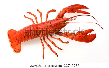 a red lobster on a white background