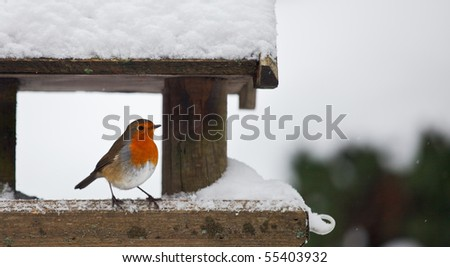 A red robin at a snow-covered bird house in winter. Photo has short depth of field and space for your text. - stock photo