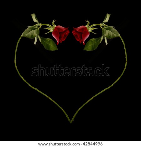 A red rose curving into the shape of a love heart. - stock photo