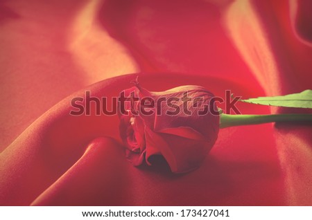Red Rose Symbolic Love Valentines Day Stock Photo 100 Legal