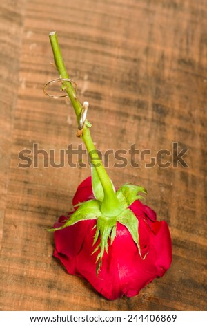A red rose with gold rings on the stem - stock photo
