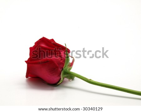A red rose with stem  on white background - stock photo