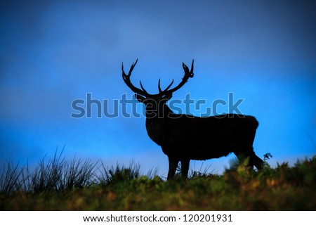 A red stag silhouetted against an approaching storm - stock photo