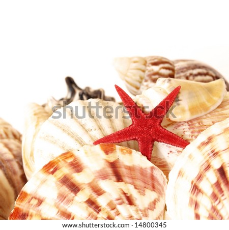 a red starfish and assorted sea shells