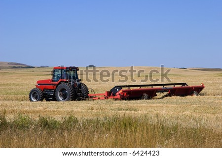 A red tractor and mower cuts golden wheat and lays it down in rows under a clear blue Alberta sky. - stock photo