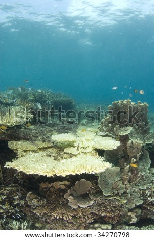 A reef in the Philippines with dead coral, indicative of much of the ocean's reefs and the result of the human impact on the fragile ecosystem - stock photo
