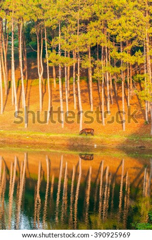A reflection in water of a horse eating the grass in the morning with sunlight and selective focus on a horse No.1 - stock photo