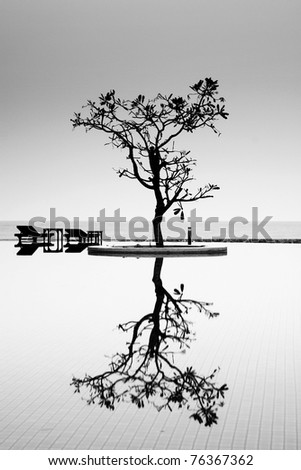 A Reflective Tree - stock photo