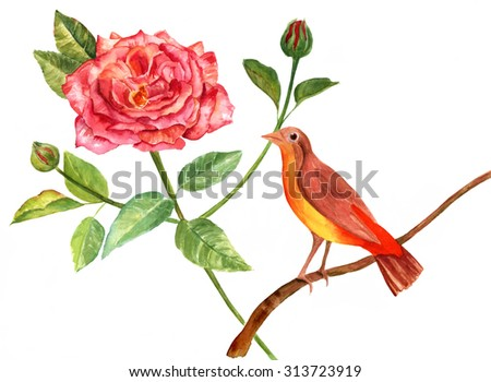 A retro style watercolour drawing of a beautiful bright bird sitting on a branch next to a red Victorian rose with green leaves and buds on white background - stock photo