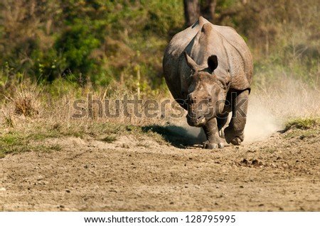 A rhinoceros charging in the direction of the camera with dust flying around. - stock photo