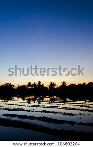 A rice field in Southern Luzon, Philippines, during sunset