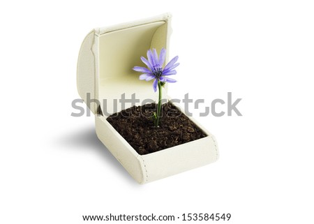 A ring box with a flower inside and white background - stock photo