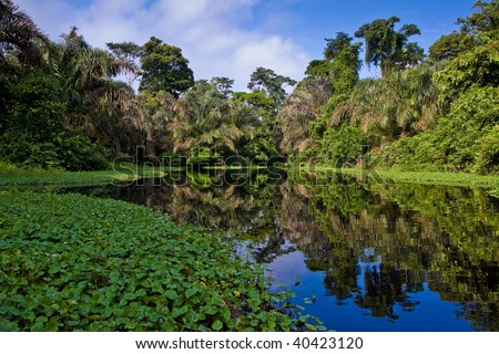 A river and beautiful trees in a rainforest - stock photo