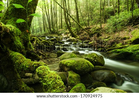 A river flowing through a forest.  Great Smoky Mountains National Park, TN, USA. - stock photo