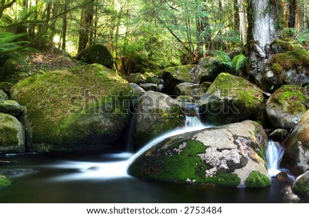 A river flows gently over moss-covered boulders in a temperate rainforest.  Victoria, Australia. - stock photo