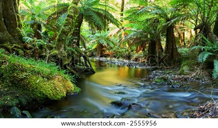 A river flows softly through temperate rainforest in golden early morning light.  Yarra Ranges, Victoria, Australia. - stock photo