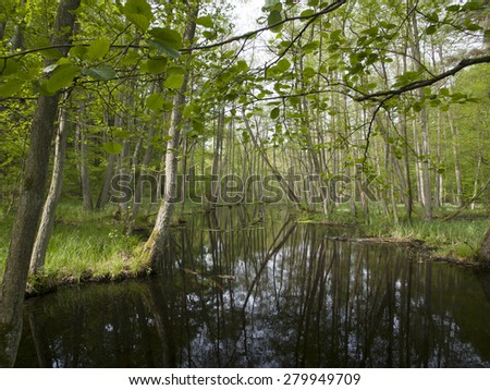 a river in forest