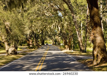 A road cutting through Massive old southern oak trees draped with spanish moss - stock photo