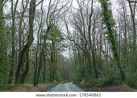 A road in forest near Guildford, UK - stock photo