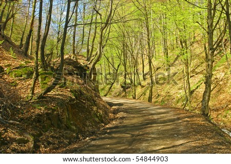 A road in the spring forest