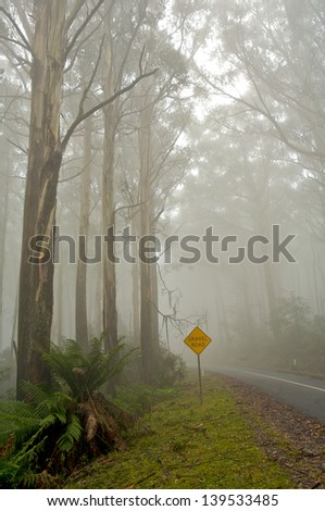 A road leading into the misty forrest, journey road - stock photo