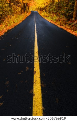 A road running through a forest in the autumn season.  Muskoka Beach Road, Ontario, Canada.  - stock photo