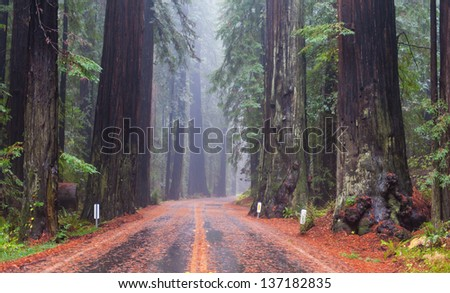 A road through the California Redwood forests - stock photo