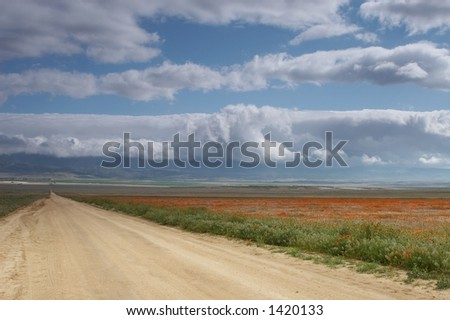 a road with poppy flowers on the side and cloudy sky - stock photo