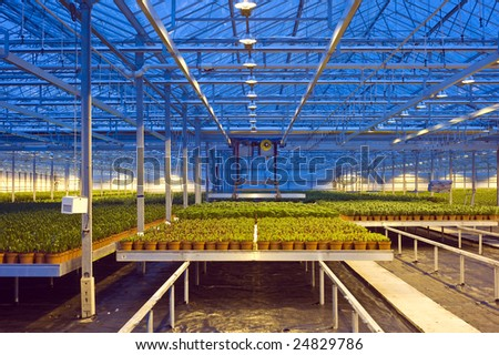A robotic pick and place unit in a tungsten lit glasshouse, arranging trays of lilies at dusk - stock photo
