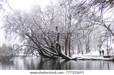 a romantic lakeside walk for a couple in the snow next too some fallen trees.