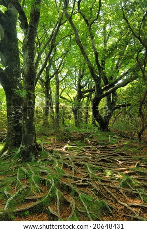 A root and the fresh green of a tree crawling on the earth - stock photo
