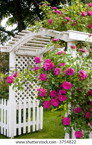 A rose arbor and picket fence in a country garden.