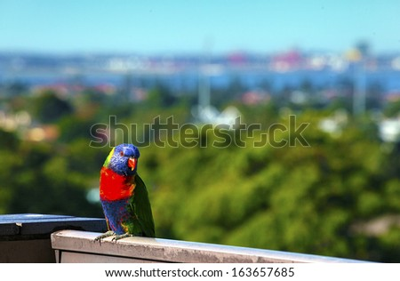 a rosella perched on balcony - stock photo