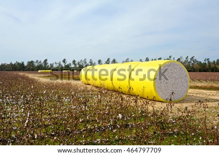 A Round Bale of Harvested Cotton Wrapped in Yellow Plastic Sitting in the Field