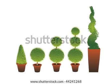 A row of different shape Topiary shrubs set in terracotta pots set on an isolated white background. - stock photo