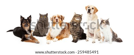A row of dogs and cats of different breeds - stock photo