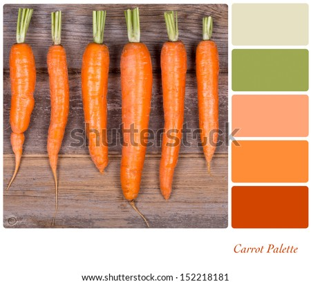 A row of fresh carrots on wooden background, in a colour palette with complimentary colour swatches - stock photo