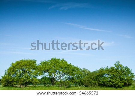 A row of green trees and bushes against a blue sky - stock photo