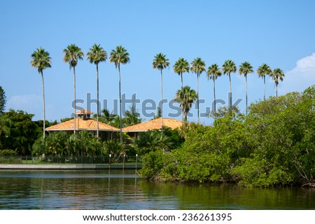 A row of palm trees in a tropical Florida setting. - stock photo