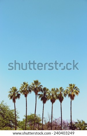 A row of palm trees with a blue sky - stock photo
