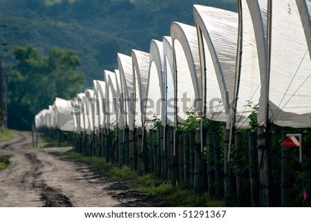 A row of plastic covered bow house tents for raspberry production - stock photo