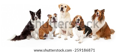 A row of six common dog breeds for families