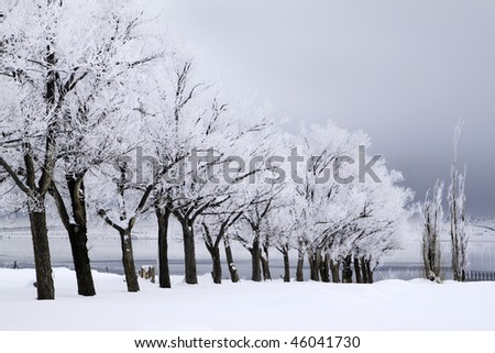 A row of snow covered trees with a stormy sky - stock photo