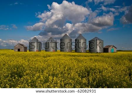 A row of steel grain bins in a field of yellow canola flowers - stock photo