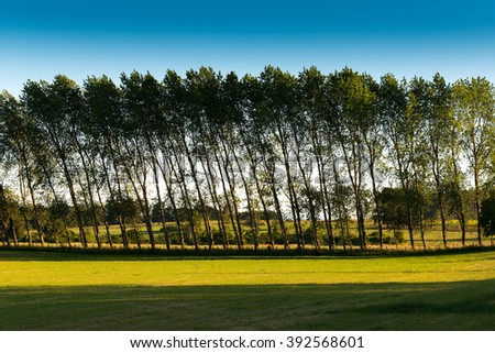 A row of trees bent by the wind, Region de los Lagos, Chile