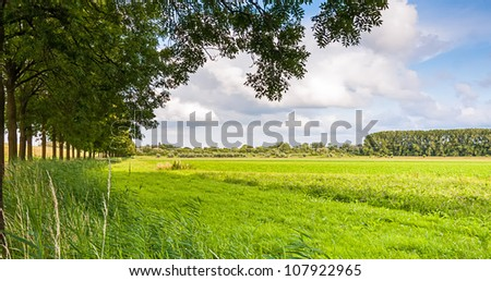 A row of trees in a green and sunny rural landscape in the Netherlands. - stock photo