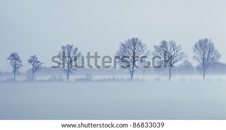 A row of trees with some birds in it during a misty winter evening. - stock photo